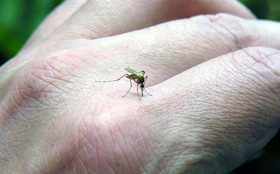 Hay 329 personas infectadas por dengue en Puebla