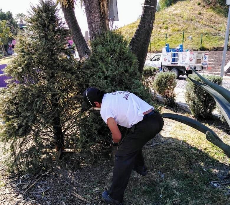 Recibe gobierno de San Pedro Cholula árboles de navidad para reciclar