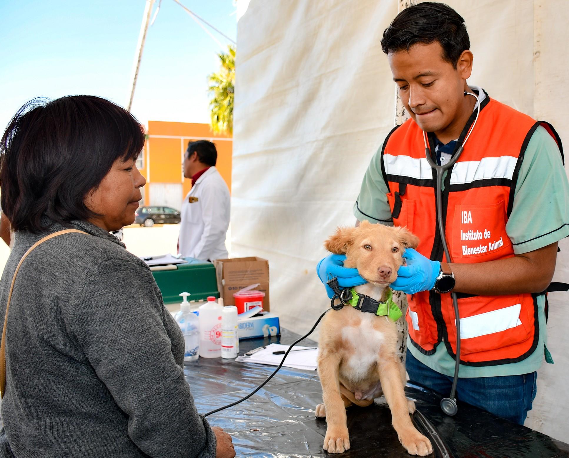 Regresan las Jornadas de esterilización gratuita de mascotas en Cuautlancingo