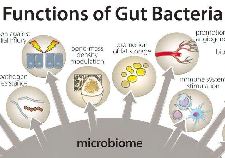 ¿En qué nos ayuda la microbiota intestinal?